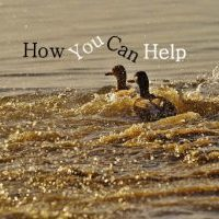 how you can help